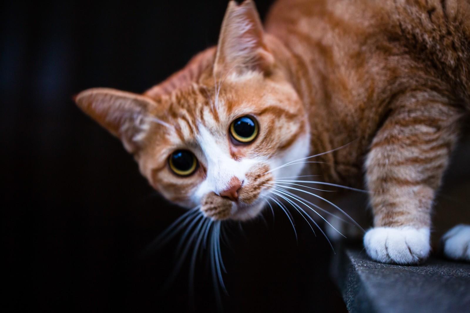9月23日(2-1) 猫まんがで楽しい英語多読 1